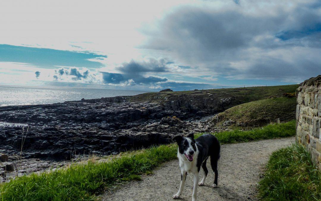 Northumbrian Walks: Craster to Amble